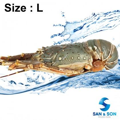 Frozen Australia Green Lobster 700g~1.1kg± each - M, L & XL size